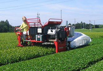 Mechanical Harvesting